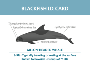 Blackfish ID card